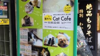 猫CAFEclalico