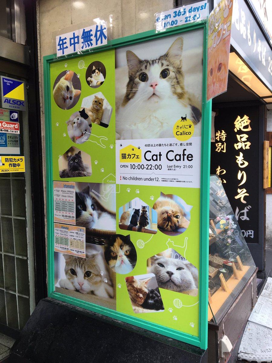 猫CAFEcalicoキャリコ